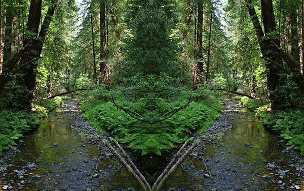 Photograph - Muir Woods Mirror #2 by Ben Upham III
