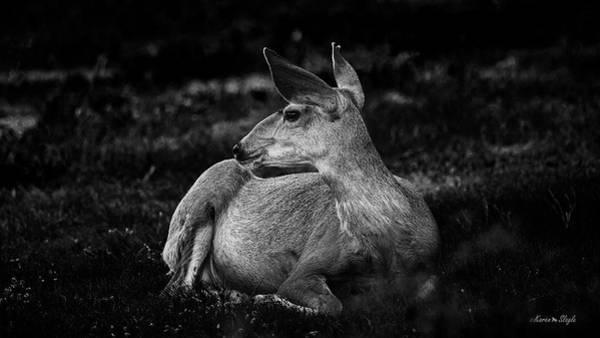 Photograph - Mule Deer Doe by Karen Slagle