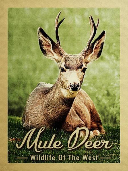 Wall Art - Digital Art - Mule Deer - Wildlife Of The West  by Flo Karp