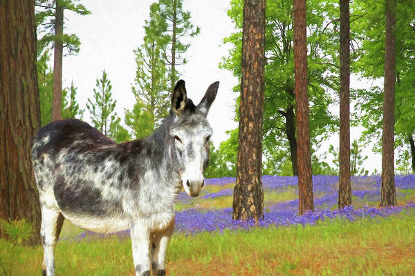 Wall Art - Photograph - Mule In The Lupines by Donna Kennedy