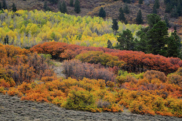 Photograph - Multi-colored Fall Colors Along County Road 5 by Ray Mathis