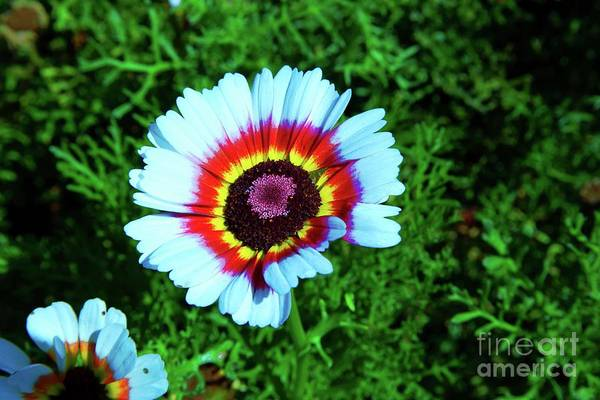 Wall Art - Photograph - Multi Colored Flower by Jeff Swan