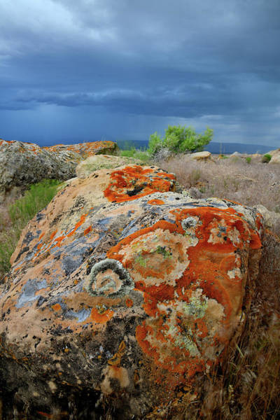 Photograph - Multi-colored Lichens On Book Cliff Boulders by Ray Mathis