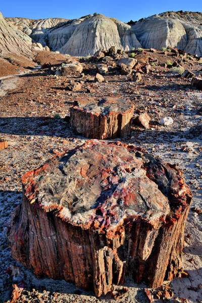 Photograph - Multi-colored Petrified Wood In Jasper Forest by Ray Mathis