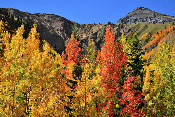 Photograph - Multicolored Fall Aspens At Red Mountain Pass by Ray Mathis