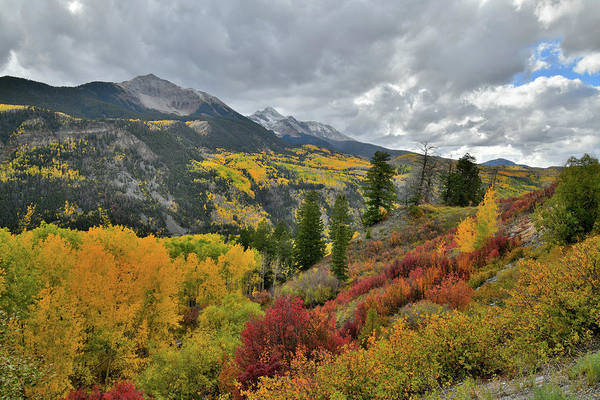 Photograph - Multiple Fall Colors Near Highway 145 Overlook by Ray Mathis