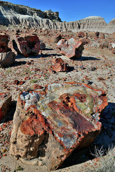 Photograph - Multiple Petrified Logs In Jasper Forest by Ray Mathis