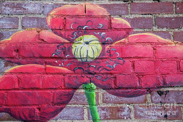 Photograph - Mural Of Flower On Brick Wall by Kevin McCarthy
