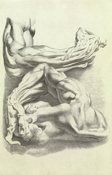 Wall Art - Painting - Muscles by Peter Paul Rubens