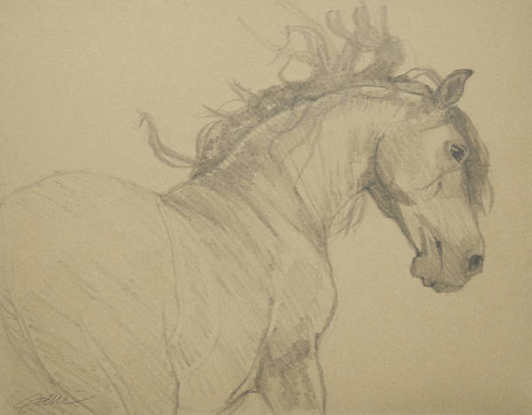 Drawing - Mustang by Jani Freimann