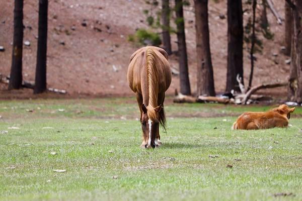 Photograph - Mustang Mama by Sagittarius Viking