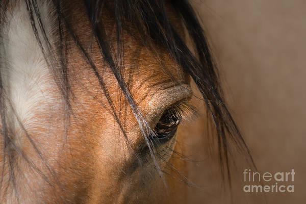 Wall Art - Photograph - Mustang Soul by Lisa Manifold