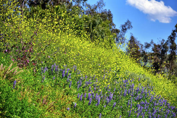 Wall Art - Photograph - Mustard And Lupines 2 by Linda Brody
