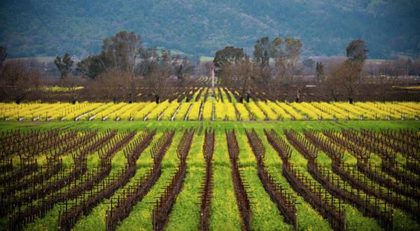 Napa Valley Photograph - Mustard Bloom At Napa by By Sathish Jothikumar
