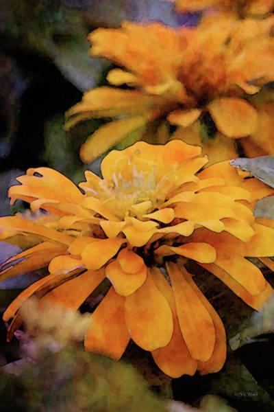 Photograph - Mustard Zinnia 7227 Idp_2 by Steven Ward