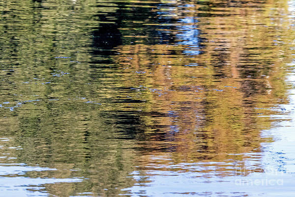 Photograph - Muted Reflections by Kate Brown