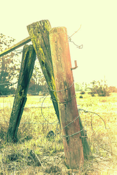 Wall Art - Photograph - Mutual Support by Caitlyn Grasso
