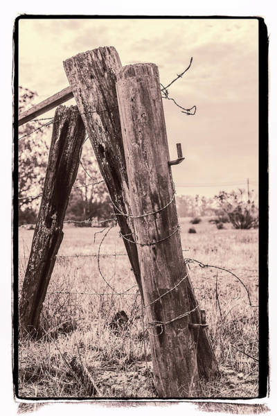 Wall Art - Photograph - Mutual Support Sepia by Caitlyn Grasso