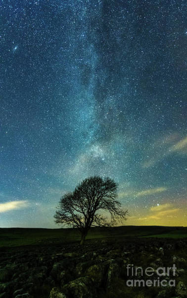 Photograph - Mw Tail Above The Lonely Tree by Mariusz Talarek