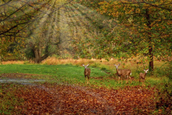 Photograph - My Deer Family by Susan Candelario