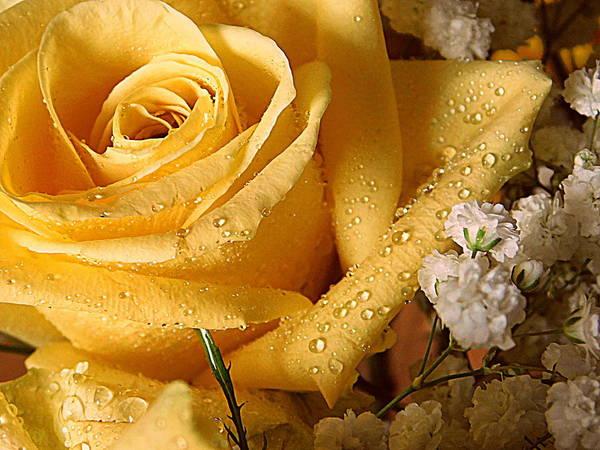 Wall Art - Photograph - My Favorite Flower - 1 by Arlane Crump