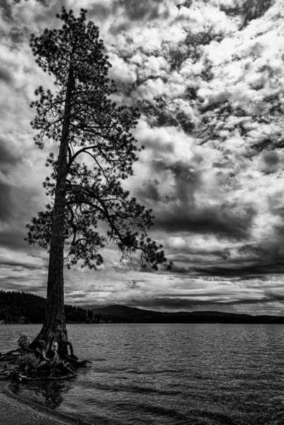Photograph - My Favorite Tree Black And White by Matthew Nelson