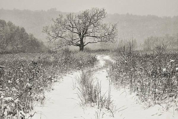 Photograph - My Favorite Tree by Dawn J Benko