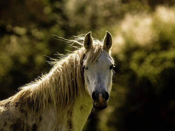 Photograph - My Friend by Jorg Becker
