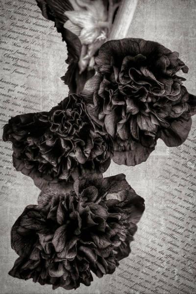 Photograph - My Hollyhocks B  W by Donna Kennedy