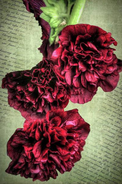 Photograph - My Hollyhocks by Donna Kennedy