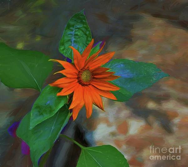 Photograph - My Little Sunflower by John Kolenberg