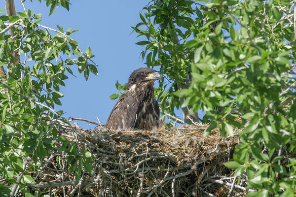 Photograph - My Nest by Ronnie and Frances Howard