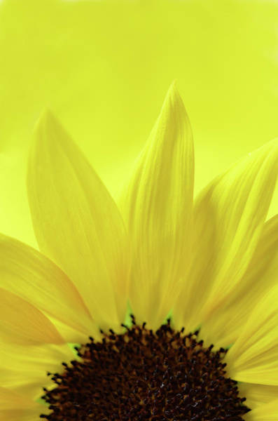Photograph - My Sunshine by Michelle Wermuth