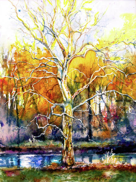 Sycamore Painting - My Sycamore Tree by Patricia Allingham Carlson