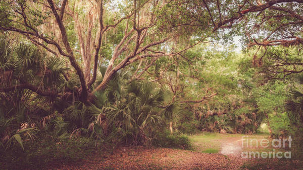 Wall Art - Photograph - Myakkahatchee Creek Park, North Port, Florida by Liesl Walsh