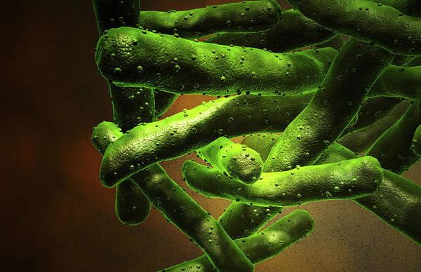 Bacteria Wall Art - Photograph - Mycobacterium Tuberculosis by Medicalrf.com
