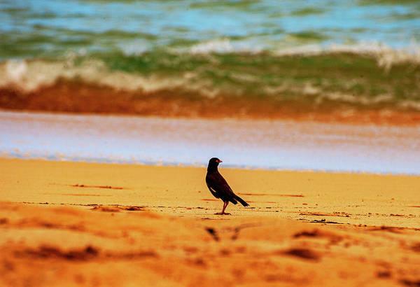 Photograph - Myna Bird On The Beach by Anthony Jones
