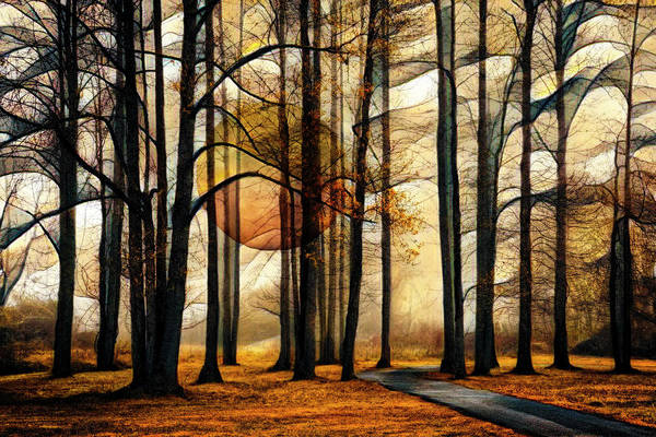Wall Art - Photograph - Mysterious Forest by Debra and Dave Vanderlaan
