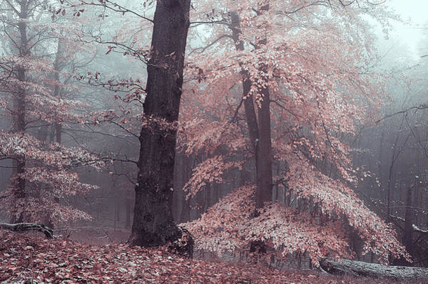 Photograph - Mysterious Woods Silver Trees by Jenny Rainbow
