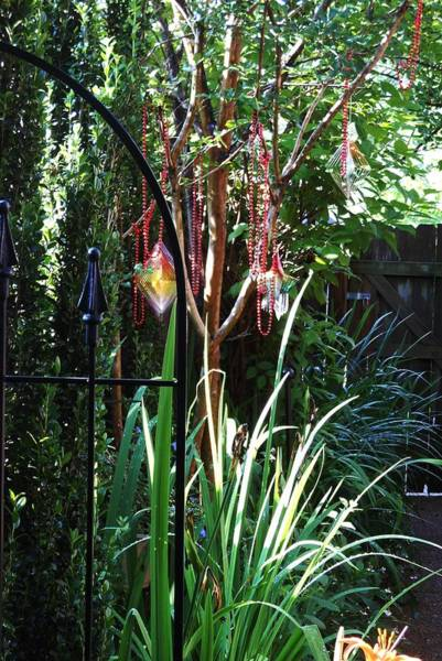 Hurricane Lily Photograph - Mystery Fence by Lord Frederick Lyle Morris - Disabled Veteran