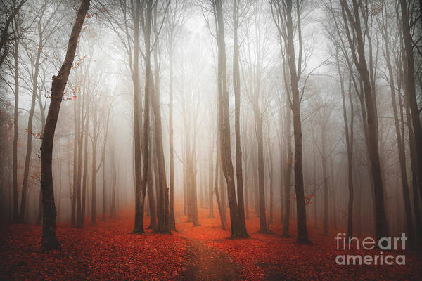 Wall Art - Photograph - Mystic And Magic For During Autumn In by Tom Tom