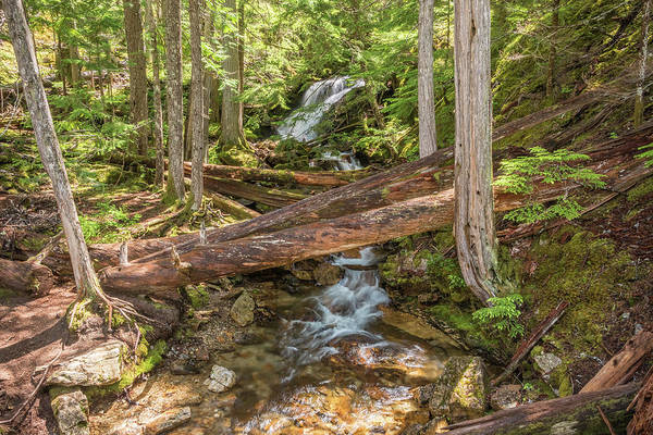 Photograph - Mystic Trail by Kristopher Schoenleber