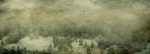 Photograph - Mystic Wood by Vittorio Chiampan