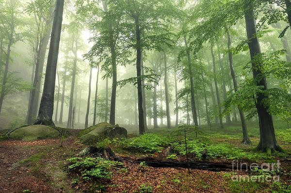 Wall Art - Photograph - Mystical Foggy Forest On The Slope by Kritskiy-ua