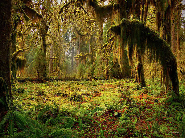 Photograph - Mystical Forest by Leland D Howard