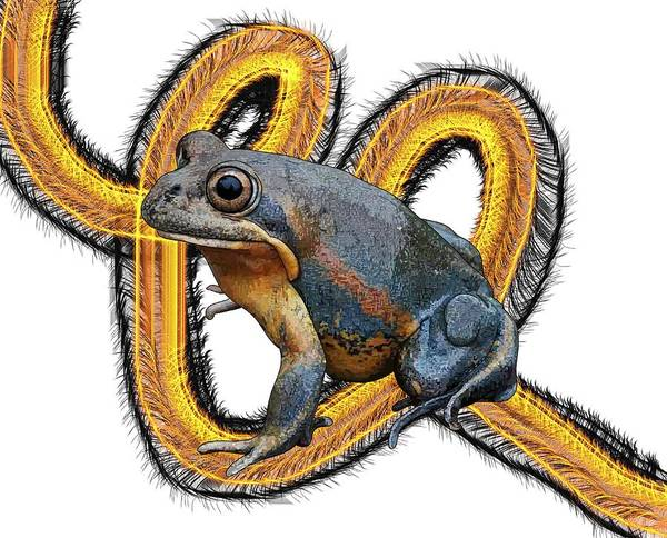 Digital Art - N Is For Northern Banjo Frog by Joan Stratton