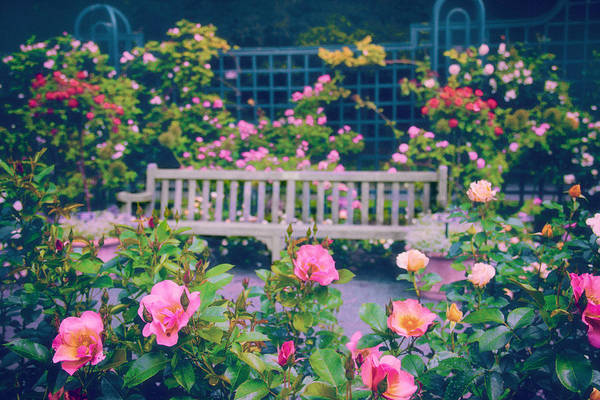 Photograph - Rose Garden Repose by Jessica Jenney