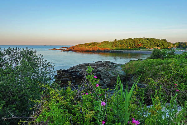 Photograph - Nahant Ma Egg Rock Through The Flowers by Toby McGuire