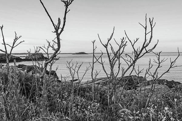 Photograph - Nahant Ma Egg Rock Through The Trees Black And White by Toby McGuire