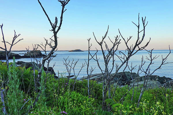 Photograph - Nahant Ma Egg Rock Through The Trees by Toby McGuire